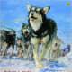 Akiak: A Tale From the Iditarod by Robert J. Blake
