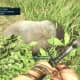 Far Cry 3 Crafting Guide - Extended Munitions Pouch: Poor Little Elephant-Pig Thing...