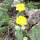 Find Prickly Pear Cactus on the hiking and biking trails at  Williamson County Regional Park  Leander and Cedar Park TX