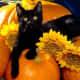 black-cat-halloween-invitations