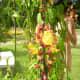 """""""Garden of Eden"""" flowers"""