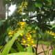 why-shift-to-planting-ornamental-plants