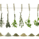 HERBS: 7 grams (.25 oz) of your favorite herbs or spice for each cup (8 oz) of oil