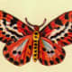 Tiger stripe butterfly clip art image