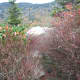 tanawha-trail-blue-ridge-parkway-blowing-rock