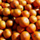 These satsuma oranges, picked on Christmas day 2007 in Gainesville, Florida, were photographed by Sfullenwider.