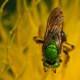 macrophotograpy-of-flying-insects
