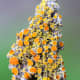 macrophotography-of-lichen-macrophotographic-images-of-lichen