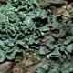 An unusual green lichen.