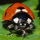 A ladybird.