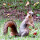 Many busy squirrels