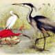 free-bird-pictures