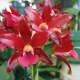 Orchid Garden Near Hilo