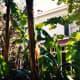 View of Edison home through the tropical foliage