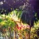 Lush tropical foliage around the Edison home