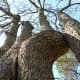 Nature at Barton Creek Twin Falls Greenbelt Trail Austin TX