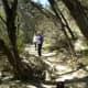 Tree Shaded Trails at Barton Creek Trails Austin Texsa