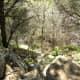 Trails at Barton Creek Greenbelt Austin Texas