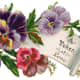 """Vintage Mother's Day card: Pansies with scroll note """"A token of love"""""""