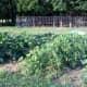 gardenreuse