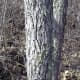 As you can see from the picture, Sassafras has a pretty distinct large bark, separated by gaps.