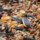 Seed-based diets are common for birds but not the healthiest.