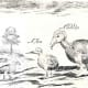 Labelled sketch showing a Broad-billed Parrot, a Hen, and a Dodo