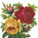 Vintage Valentine's flower bouquet with pink, yellow and red roses
