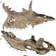 Here are actual bones found from the Kosmoceratops.