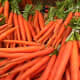 Bunches of Carrots