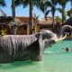 Elephant Figure in Coolwaves with the nose as a hose!