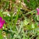 Blooming wildflowers in Mason Road Park