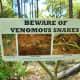 Venomous Snake warning