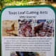 kleb-woods-nature-preserve-amazing-site-in-tomball-tx