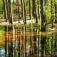 Trees reflected in marsh at Kleb Woods