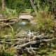 Appearance of a beaver dam at Mercer Arboretum