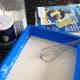 Mix flour, water, and a little salt to make a soupy glue mixture.
