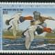 the-world-of-amazing-waterfowl-birds