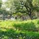 Lush garden greenery