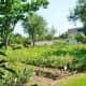 Nice looking garden!