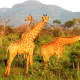 @ Tau Game Lodge at Madikwe Game Reserve