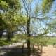 Hike and Bike Trails at Brushy Creek Sport Park - Cedar Park TX