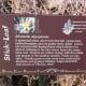 Trail Marker for Stick Leaf  -Brushy Creek Sports Park - Cedar Park TX