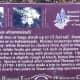 Trail Marker for Rough Leaf Dogwood - Brushy Creek Sports Park -  Cedar Park TX