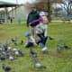 Birds being fed