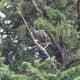 Bird in a tree right above the condo I stayed at in Estes Park, Colorado.
