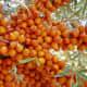 Sea-buck thorn berries
