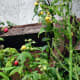 organic-vegetable-gardening-diary-and-planner