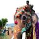 Dasara Festival Elephants, Mysore India