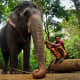 Indian pet elephant